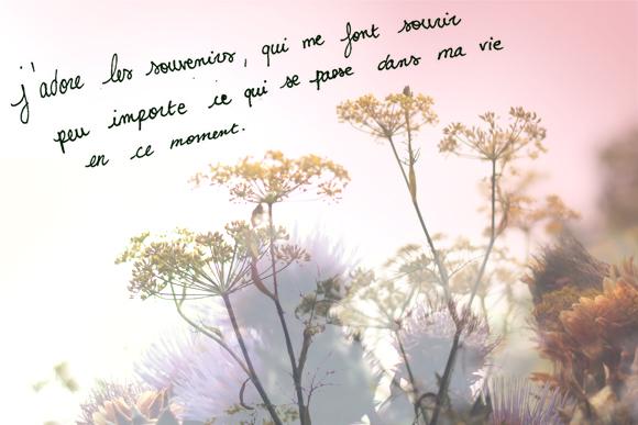 frase_do_dia_memorias
